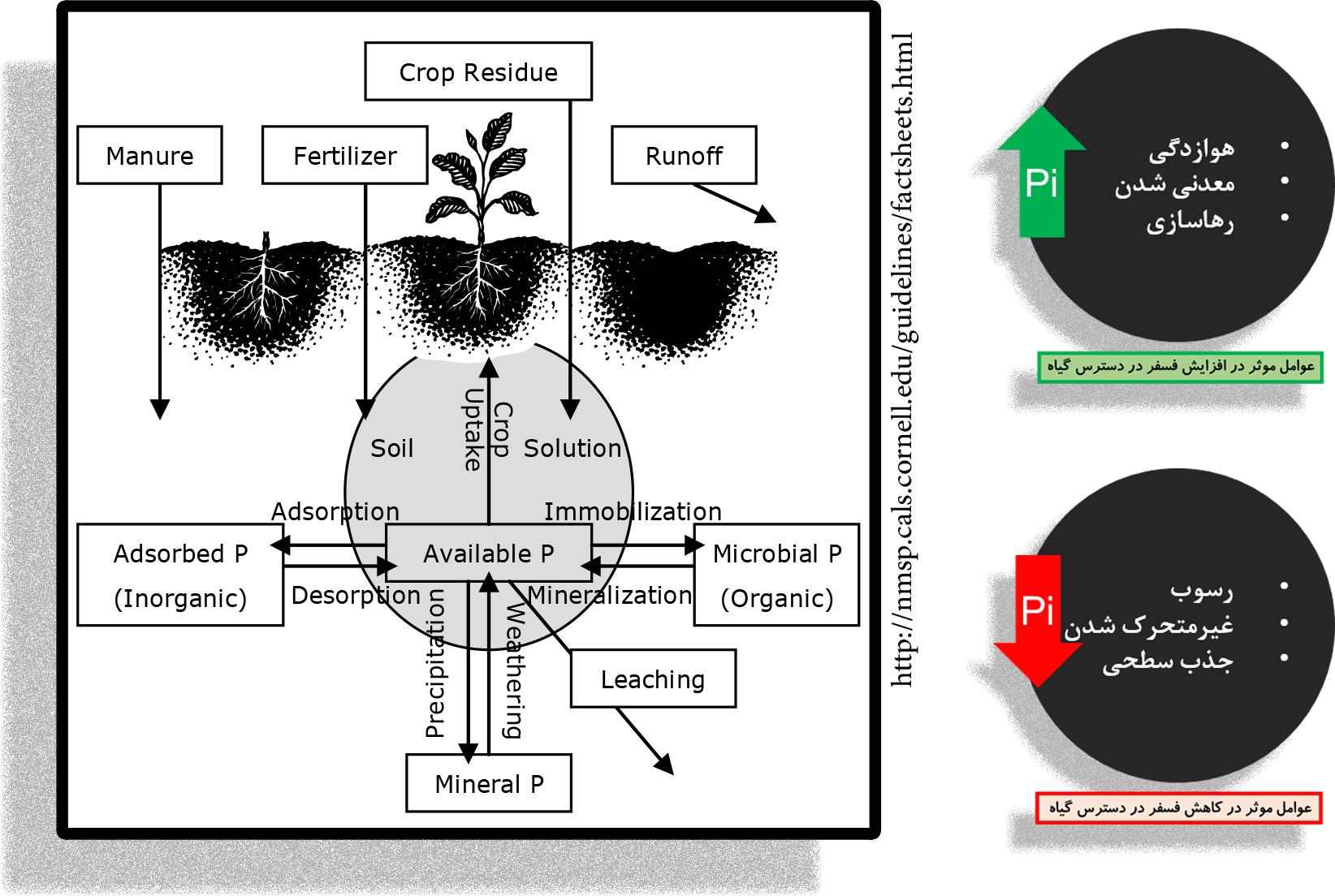 سبز  گندم در خاک شرکت زیست فناور سبز | فسفر